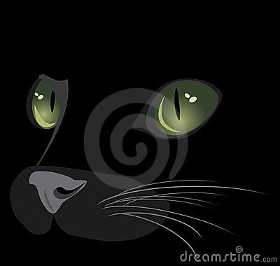 Muzzle of black cat