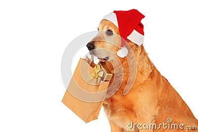 "My dog   - "" Golden retriever """