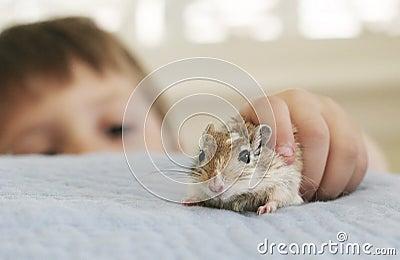 My friend the gerbil