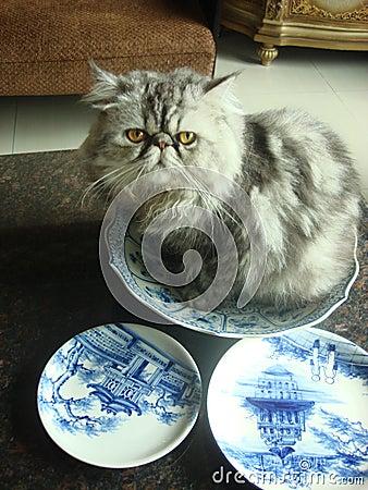 Free My Naughty Persia Cat Stock Photography - 43167032
