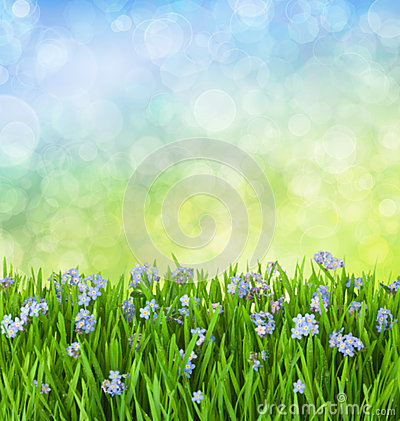 Myosotis Blue Flowers into Green Grass