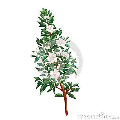 Myrtle branch  on white