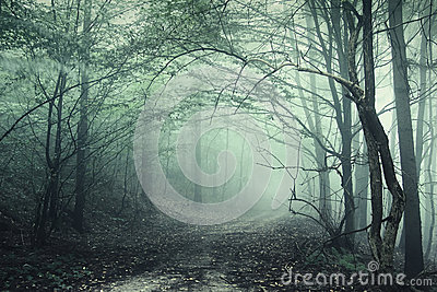 Mysterious dark forest with spooky trees and green fog