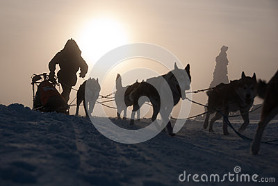 Mysterious dog sled Editorial Stock Photo