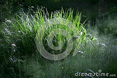 Mysterious grass