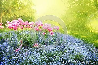 Mysterious sunny garden