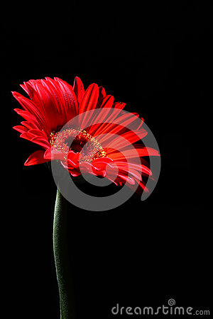 Mystery red flower