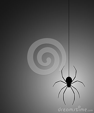 Mystery spider