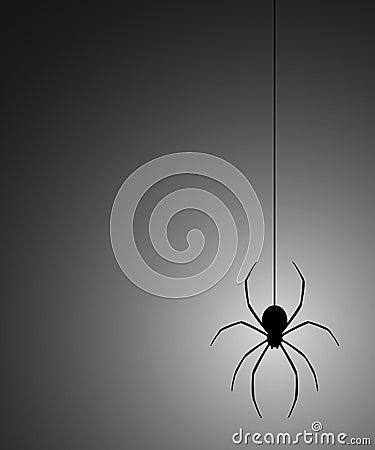 Mystery spider