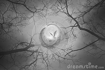 Mystic moon bird circle