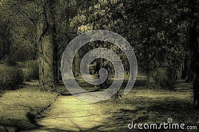 Mystic park
