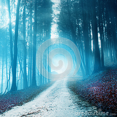 Free Mystical Blurry Forest Road Royalty Free Stock Image - 46480996