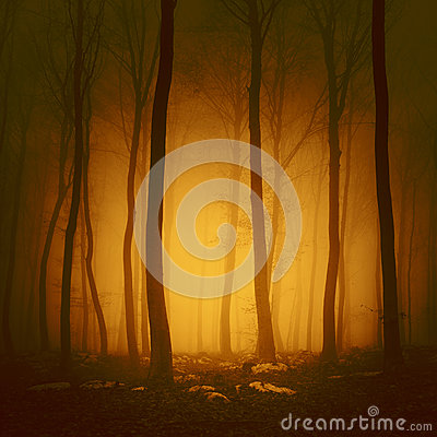 Free Mystical Orange Red Forest Stock Photos - 50392203