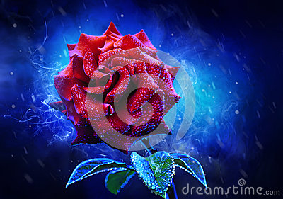 Mystical red rose