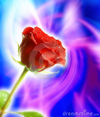 Free Mystical Red Rose Stock Image - 6575061