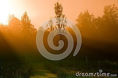 Mystisk morgon