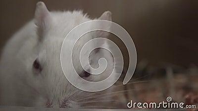 Mysz, myszy, ślepuszonki