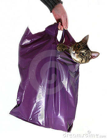 Não deixe o gato fora do saco!