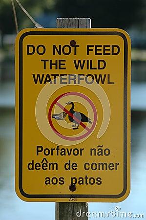 N alimentez pas les canards