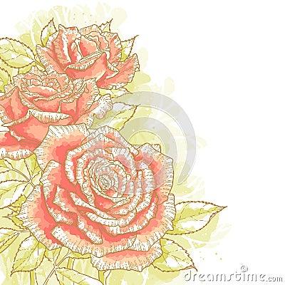 Na biały tle różowe róże