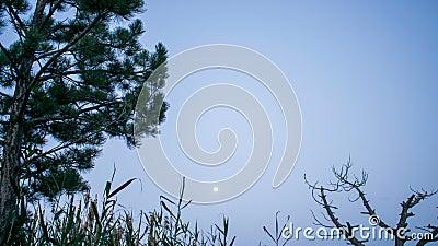 Nacht zum Tag hinter dem Baum stock video