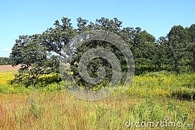 Nachusa Grasslands in Illinois