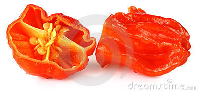 Naga Morich of Bangladesh