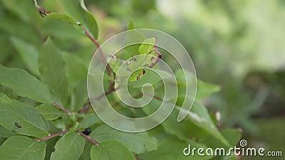 Nahaufnahme von grüngrünem Laub auf einem Baumzweig gleitet im Wind in einem Wald am Rande einer Klippe im Sommer in einem Wald stock video footage