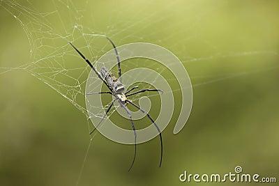 Nahes hohes der Spinne