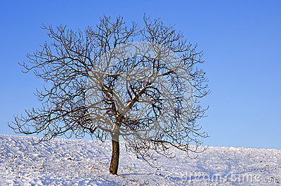Naked tree on a sunny day