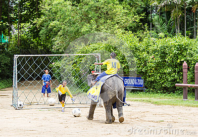 NAKORNPATHOM THAILAND, June 20:  Elephants play football  perfor Editorial Photo