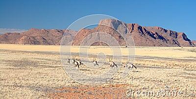 African Landscapes - Namibia