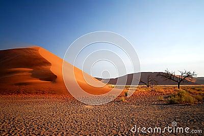 Namib dune 3