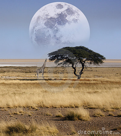 Free Namibia - Giraffe - Etosha National Park Stock Photo - 14006720