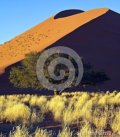 Namibia - Sossusvlei sand dune