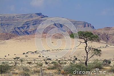 Namibian landscape dry desert