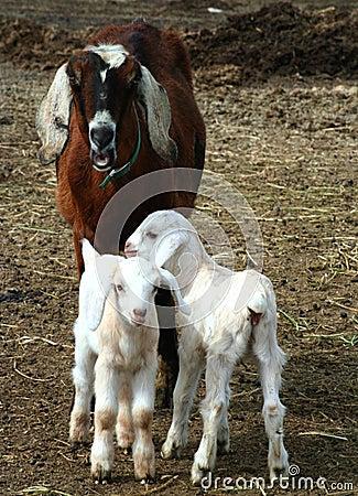 Nanny And Kids