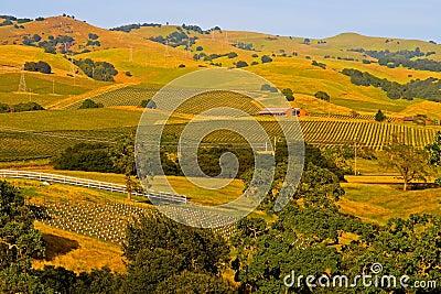 Napa Valley vineyard at sunset