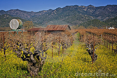 Napa Valley, Wine Country California
