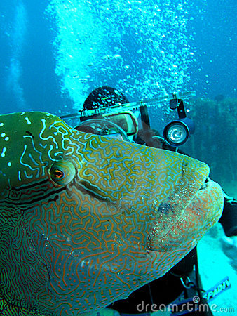 Napoleon fish