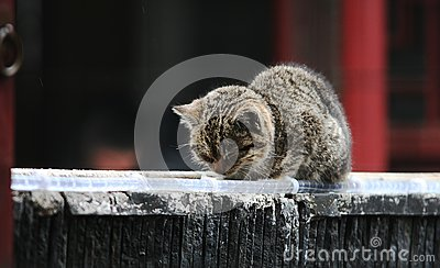 Napping cat on the roof
