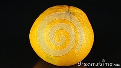 Naranja giratoria en un fondo negro citrus almacen de video