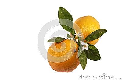Naranjas y flor