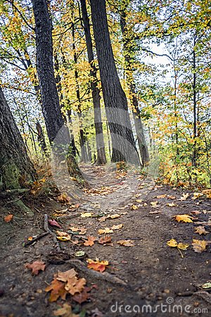 Free Narrow Mud Path Through Vibrant Autumn Woods Stock Images - 101812474