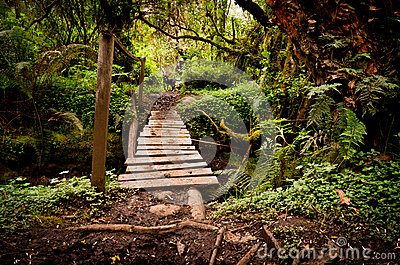 Narrow old wooden bridge