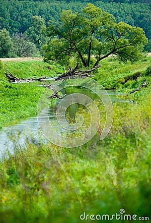 Narrow river in Russia