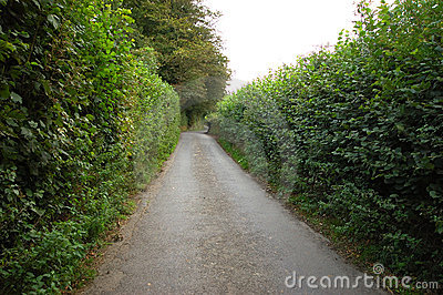 Narrow Road Through High Hedge