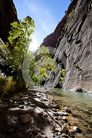 The Narrows trail in Zion National Park