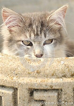 Nascondersi del gatto
