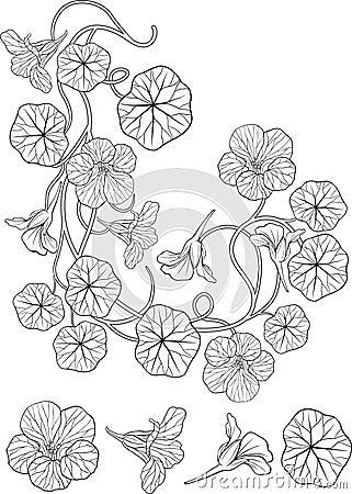 Nasturtium flower art nouveau style tattoo